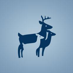 Deerfeed